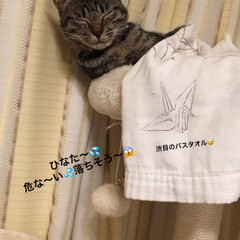 キジトラ/猫/おやすみショット/LIMIAペット同好会/にゃんこ同好会/至福のひととき うちのひなた😸 おやすみショットパート3…