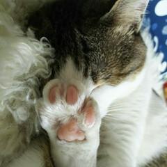 おやすみショット いつもこの寝相の可愛さに助けられてます🎵
