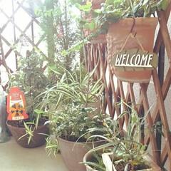 greenのある生活/FlowerShop/階段の踊り場 気付けばgreen🌿ばかりやから ちょっ…