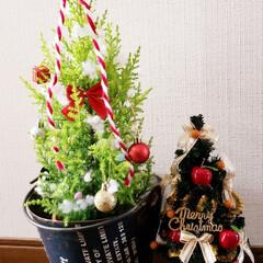 クリスマスツリーの飾り方/クリスマスツリー土台/クリスマスツリー  カゴからブリキ缶に変えてみた(^ー^)…(2枚目)