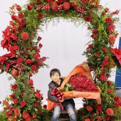 スワッグ作り/ヒムロスギ/サンキライ/リース作り/アーチの花全てをサプライズプレゼント/三重はなフェスタ またまた三重はなフェスタのphotoです…