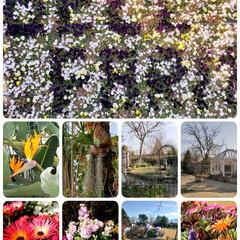 お散歩/春の洋らん展/松阪農業公園ベルファーム/小さい春 土曜日、チビゎパパとお買い物🎵🎵 その隙…