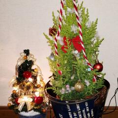 クリスマスツリーの飾り方/クリスマスツリー土台/クリスマスツリー  カゴからブリキ缶に変えてみた(^ー^)…(1枚目)