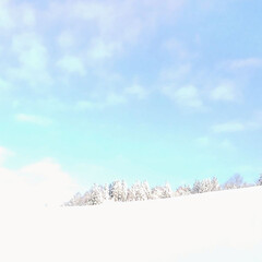 銀世界/冬景色/暮らし こんにちは🍀 今朝の家の裏の景色です~❄…