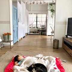 チワワ/壁塗装/ドアDIY/クッションフロア/セルフリノベーション/和室から洋室/... 妹が風邪でダウンしてしまい2歳の甥っ子を…