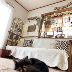 リビング/チワワ/トレリス/ソファー手作り/出窓/DIY/... おはようございます♡  我が家のシャイボ…