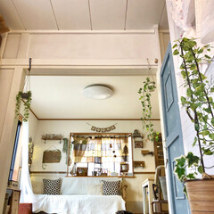 ナチュラルインテリア/チワワ/出窓/ドアDIY/壁塗装/クッションフロア/... 元和室からの眺めです♡ 床に寝そべって撮…