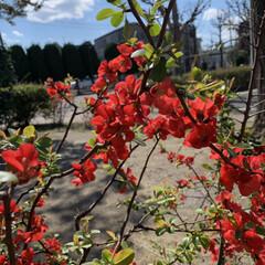春/LIMIAおでかけ部/フォロー大歓迎/おでかけ/春の一枚 なんて花かは知らないけど。きれいな赤!