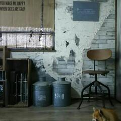 アトリエ/作業部屋/インダストリアル/犬と暮らす/チワワ/愛犬/... 部屋の写真を撮ろうとすると 必ず割り込ん…