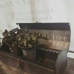 box/工具入れ/観葉植物/グリーン/ツールボックス/工具箱/... ホームセンターなどで売られているツールB…