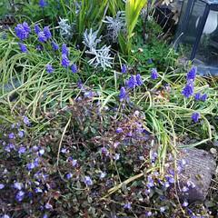 ガーデニング/ガーデン/花/春の花/春の庭/小さい春 あっという間に庭が賑やかになり出しました…