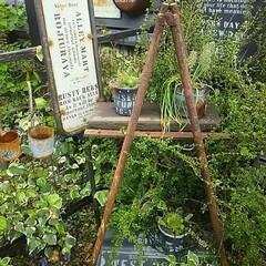 はしご/ラダー/ガーデニング/ジャンクガーデン/ジャンク/庭DIY/... お気に入りのジャンクなリアルサビサビラダ…