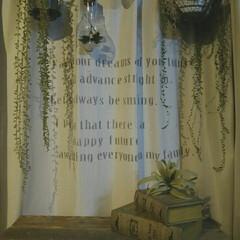 観葉植物/グリーン/窓際/ステンシル/英字/カーテンリメイク/... レースのカーテンにはステンシルで英字を入…