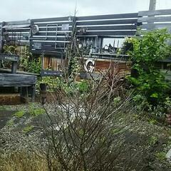 手作りの庭/ジャンク/インダストリアルな庭/ガーデニング/ガーデン/庭/... お気に入りの眺め☆ 木越しのフェンス☆ …(1枚目)