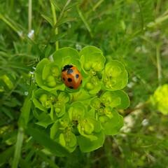 春/裏山/庭/自然/てんとう虫/春の一枚 わが家の裏山と隣接する空き地は てんとう…