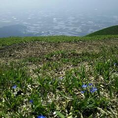 GW/わたしのGW/阿蘇/自然/山 熊本は阿蘇の大観峰で☆何十年振りかに見た…