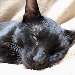 黒猫/保護猫/ぶさかわ/白目/猫の写真へたくそ選手権/すごい顔/... ボンネットから救出した黒猫のネロ君です。…