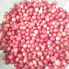 ベリーコテージ/ブルーベリー ピンクレモネード こんにちは 今年はピンクレモネード4本植…