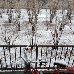 雪景色 先ほどアップしたよりも積もってきました