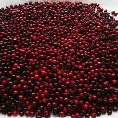 ジューンベリー収穫/ベリーコテージ こんにちはーこれはジューンベリー 収穫し…