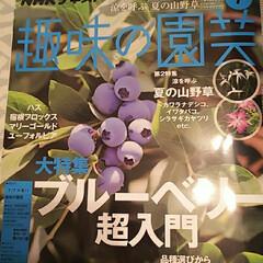 ピンクレモネード/趣味の園芸掲載/ベリーコテージ/みんなにおすすめ こんばんは 今日発売されたNHKの趣味の…
