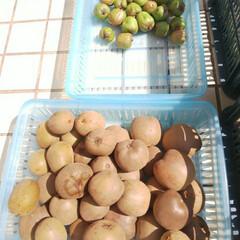 黄桃のコンポート/ベリーコテージ/ベビーキウイ/食欲の秋 こんにちはー 今日はベビーキウイ&キウイ…
