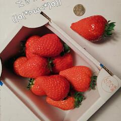 千葉県かおり野いちご/お土産/イチゴ♪ オーナーからのお土産💕 大きな🍓 甘くて…