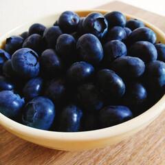 ブルーベリー/初物/ベリーコテージ/ノーザンハイブッシュ系/デューク 今年初のブルーベリーが収穫出来ました👏👏…