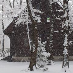 雪景色 家の前の公園