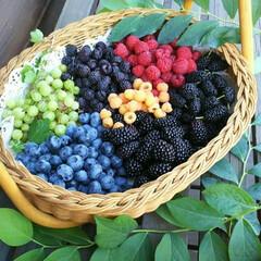 ファールゴールド/グーズベリー/ブルーベリー/ブラックベリー/マルベリー/ラズベリー/... こんばんは 全てベリーコテージ産ですよ …
