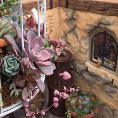 ガーデニング/ガーデン/モルタル造形/多肉植物