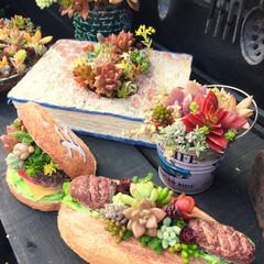 多肉寄せ植え/多肉/モルタル造形/モルタルデコ/モルタル モルタルデコ💕 モルタルバーガー🍔とモル…