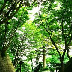 芝桜🌸/平和観音/ウォーキングコース/神秘的/新緑/パシャリ!おでかけワンショット/... 遠くに旅行やおしゃれなスポットにおでかけ…