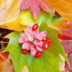 かわいい実/赤い実/紅葉/秋 今朝、2、3センチ❄が積もってた……💦😨…