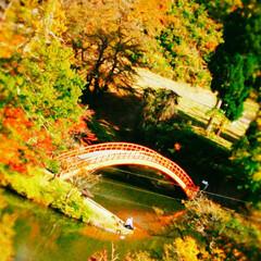 クルーズ船/赤い橋/紅葉スポット/紅葉/公園/おでかけ/... 今年の紅葉🍁おでかけ😊 たぶん最初で最後…