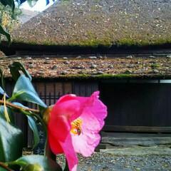 旅の景色/旅行/秋/おでかけ/旅 武家屋敷に行ってみました。枝垂れ桜もいい…