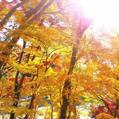 かわいい実/赤い実/紅葉/秋 今朝、2、3センチ❄が積もってた……💦😨…(4枚目)