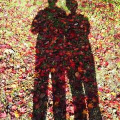 落葉/シルエット/紅葉スポット/秋/風景 気持ちいいお天気に誘われてお散歩🎵🎵ふら…