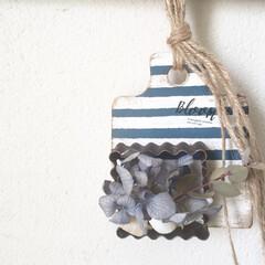 ドライフラワー/貝殻/ボーダー柄/クッキー型抜き/カッティングボード/カッティングボードアレンジ/... ALLセリアで壁掛け雑貨を作りました⚓︎