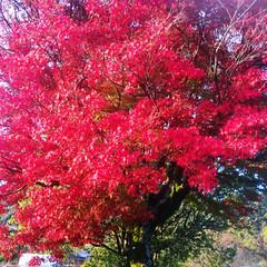 紅葉🍁 かなりご無沙汰からの投稿! すっかり秋で…(1枚目)