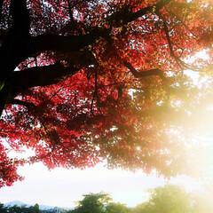紅葉🍁 かなりご無沙汰からの投稿! すっかり秋で…(2枚目)