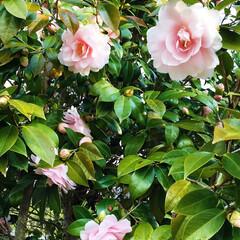 春の一枚 そぉそぉ‼️ 今日このお花に気付きました…