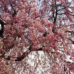 春の一枚 今朝の通勤中にて😊 風が冷たく 寒い中 …