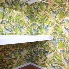 ボタニカル壁紙/ジャングル 広いウォークインクローゼットには大胆なボ…
