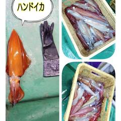 キッチン手袋サイズ(S)/ハンドイカ/眠い/イカ捕り またまたイカ捕りの写真💦 昨夜は ハンド…