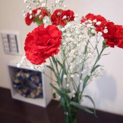 カーネーション/母の日/玄関/お花/インテリア いつかの母の日にお義母さんにあげたカーネ…