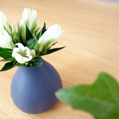 kalla/カーラ/フラワーベース/花瓶/インテリア/雑貨/... Kalla (カーラ)というフラワーベー…(1枚目)