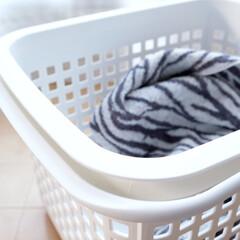 洗濯カゴ/チェスティーノバスケット/雑貨/生活雑貨 「チェスティーノバスケット M」。  洗…
