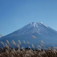 富士山/ススキ/旅/旅行 先日行ってきた富士山旅行。  目的地に向…