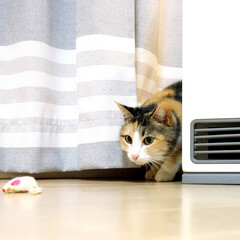 猫/ねこ/愛猫/おもちゃ/ねずみ/ネズミ/... もうすぐ12歳になるうちの愛猫。 普段は…